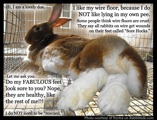 My feet are fabulous on this wire cage - I do not need to be rescued