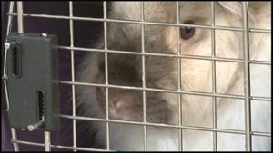 200 healthy rabbits seized over misrepresentations