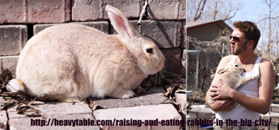 Urban rabbit farming in downtown Minneapolis