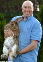 French Lop named Humphrey - world record holder for biggest rabbit