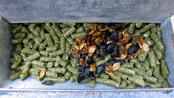 1 tablespoon of Bunny Branola sits atop the rabbit's rations for the day in this 5.5-inch J-feeder