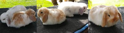 The day we chose our bunnies