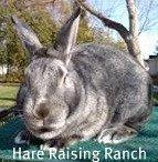 BIS Chin Satin at Hare Raising Ranch