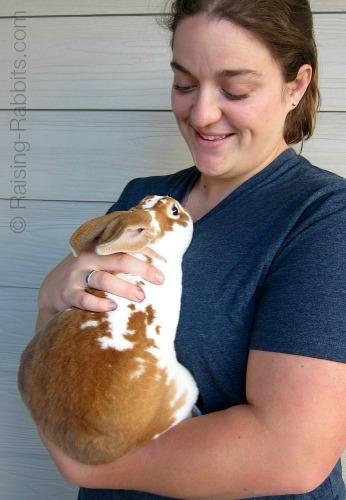A well-loved pet rabbit
