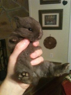 The most adorable baby bunny in the world-Spunky and Cocoa's baby