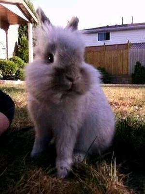 Charlie, my bunny boy :)