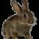 www.raising-rabbits.com